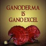 Bagaimana Ganoderma dan excellium membantu anda dalam menjalani gaya hidup sihat